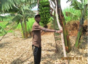 Viateur Isimbi   Bananenplantage   €500,-