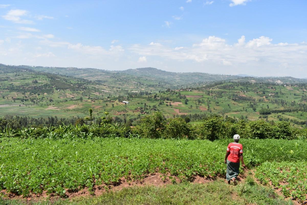 Koffieplantage van Beatrice in Rwanda