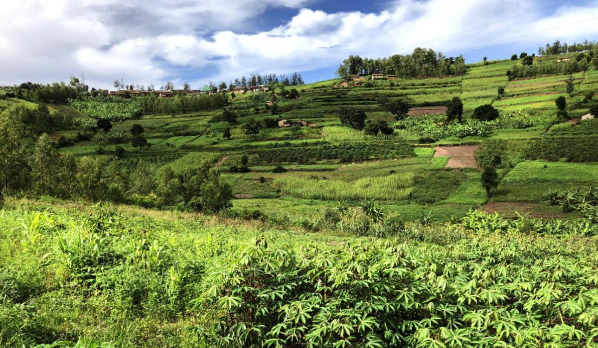 Bananenboer in Afrika met een Pure Africa microkrediet