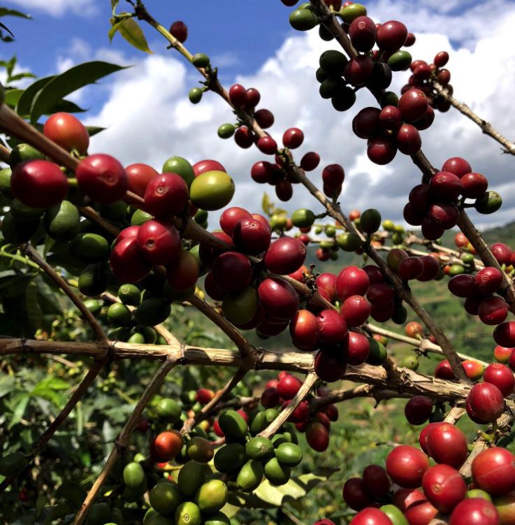 Fair coffee, meer dan Fairtrade